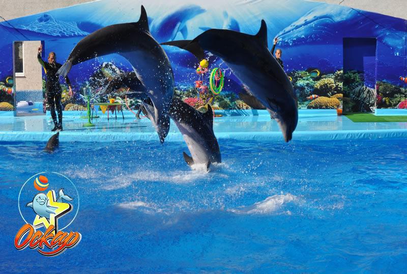 дельфинарий в кирилловке1